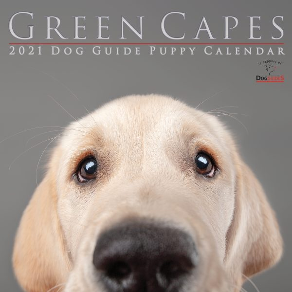 2021 Calendar Cover A Yellow Lab with a Wistful expression